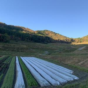 畑と、畑から帰ってきたときのごんぼさん。