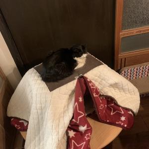 寒いし眠たいしごんぼさん。