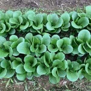 K and K farm『7つの笑顔BOX』野菜のご案内。