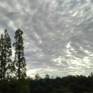 天高く馬肥ゆる秋