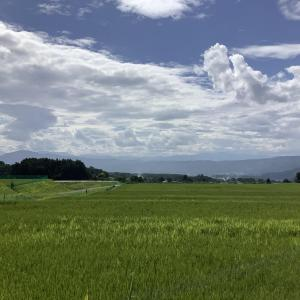 Komorebi Farm 夏の盛りの生育事情