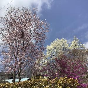 八ケ岳南麓は春爛漫でした