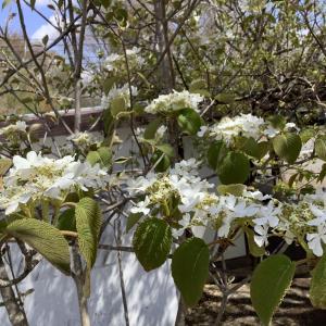 甲州 信州 蓼科それぞれの春風景