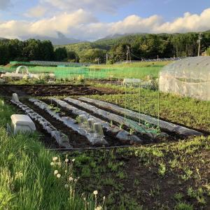 Komorebi Farm 2021開場