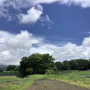 高原の6月 雨のち晴れ 山荘に同居人登場