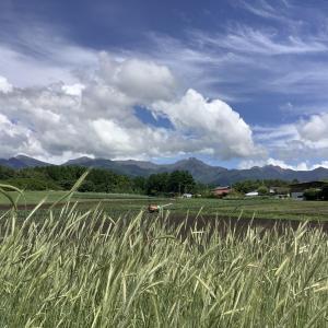 梅雨の合間に農する一日 Komorebi Farm