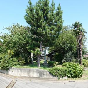 彫刻【琴平神社】踊る竹林の七賢?千葉県印旛郡栄町北辺田