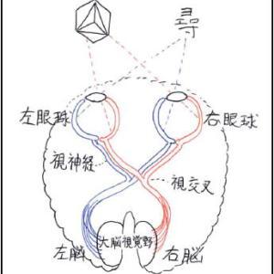 漢字や単語は右に、図形は左に