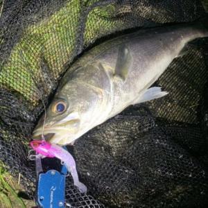 【釣果報告】コアマン新作ルアー「VJ-28」で早速シーバス釣るよー。