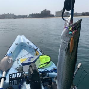 【山陰地方(島根・鳥取)】GWに釣るべきはこの魚!みんなの釣果紹介コーナー