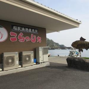 三島・柿田川湧水群での涼を回想