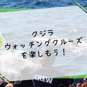 クジラウォッチングクルーズを楽しもう【冬のゴールドコース】