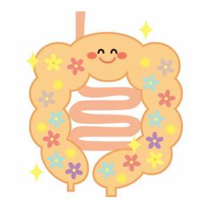 免疫力は腸内フローラによって強くなる!!毎日の食事に乳酸菌を取り入れましょう!
