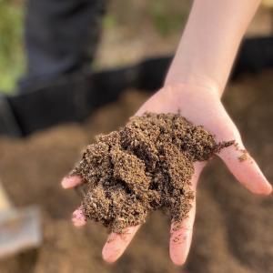 庭に畑を作って家庭菜園に挑戦です!初心者だけど収穫できるかな!?