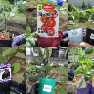 【畑日記】夏野菜の植付けをしました
