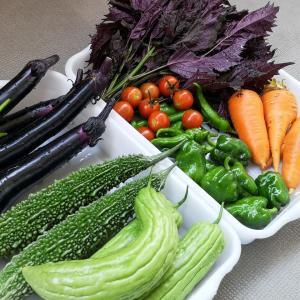大満足!!7/25現在、夏野菜の収穫量は?