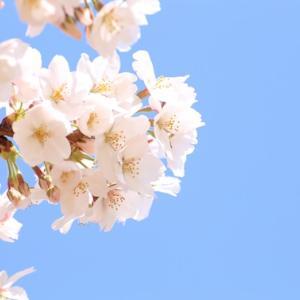 『春ウララ』