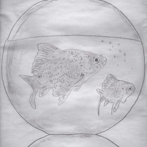 『鉛筆画・金魚』