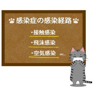 猫が教える感染症の感染経路のイラスト