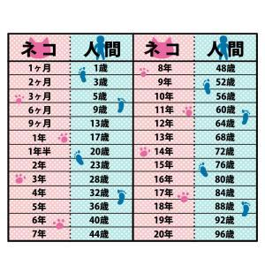猫と人間の年齢換算表