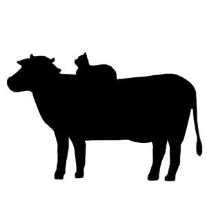シルエット牛の背中に座る猫