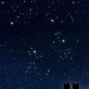 【スマホ用壁紙】冬の星座が輝く夜空と猫