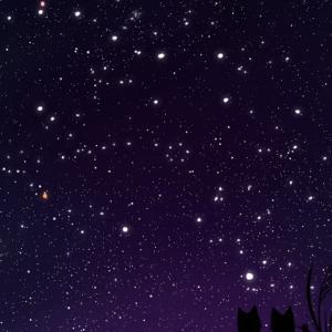 【スマホ用壁紙】秋の星座が輝く夜空と猫