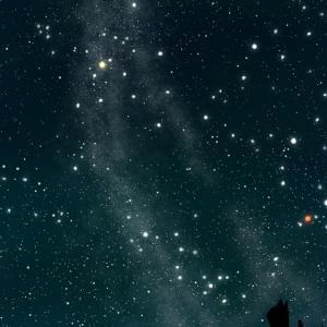 【スマホ用壁紙】夏の星座が輝く夜空と猫