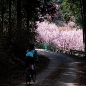 桜、花桃、桃源郷!埼玉のお花めぐりライド