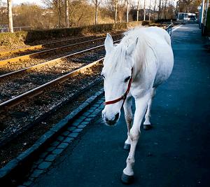 ☆白馬のジェニーのこと