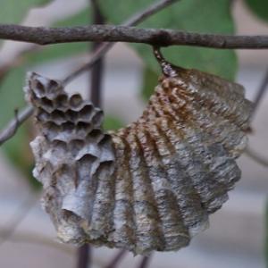 ☆庭に蜂の巣が・・・