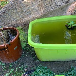 陶器で育てる金魚とプラスチック容器で育てる金魚