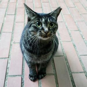 週刊「四季の花々と木々」 中庭に居つく野良猫 ~地域猫にするか、里親を探すか…~