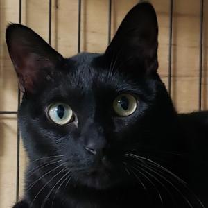 週刊「老人ホームに暮らす動物たち」 猫の日 ~確かな一歩の積み重ねでしか、遠くへは行けない~