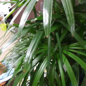 週刊「ISO9001」 観葉植物でインフルエンザ予防! ~外観を見て楽しむだけでなく~