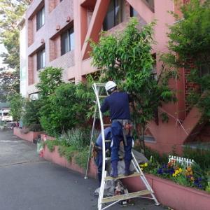 植栽の剪定と殺虫消毒 ~いつも玄関や玄関周りをキレイにしておくことが大切~
