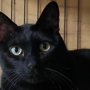 週刊「老人ホームに暮らす動物たち」 世界猫の日 ~猫は毛柄ごとに性格が違う?~