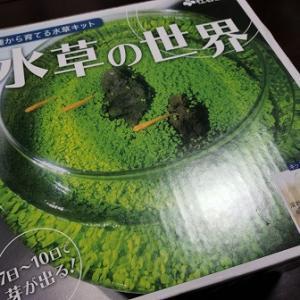 種から育てる水草の世界 ~アクアリウムのリラックス効果~