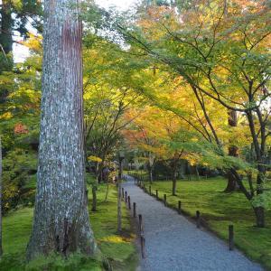 紅葉の季節 京都大原 三千院 2019