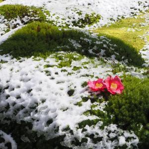 京都 嵯峨野に雪が降りました。天龍寺・常寂光寺・祇王寺