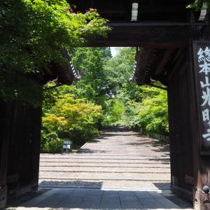 2020 6月 京都西山 光明寺の新緑