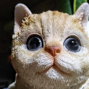 茶トラ猫、来たぞ!