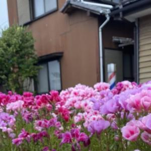 花が美しいこの季節