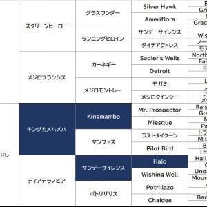 関東募集14 ディアデラマドレの2019 (キャロットクラブ[2020]1歳馬募集)