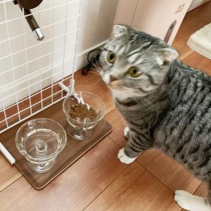 【整理】猫に学ぶ好きを優先する事