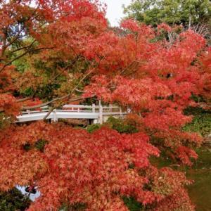 【ただの日常】三重県なばなの里に行って花と紅葉見て温泉に入ったお話