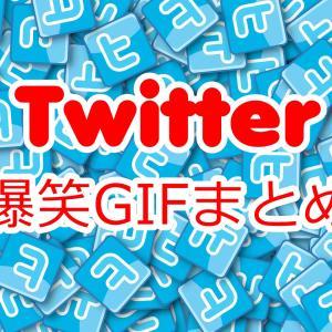 【爆笑GIFまとめ】Twitterで見かけた面白殿堂入り画像・動画【腹筋崩壊】