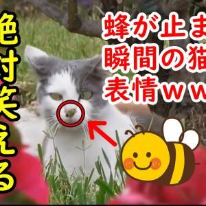 超笑えるネコ動画!癒される猫のおもしろかわいいハプニング・失敗動画まとめ!