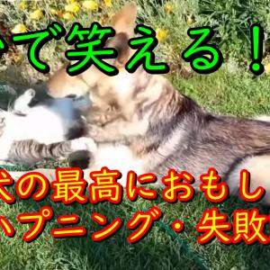 【暇つぶし動画】5秒で笑っちゃう犬の最高におもしろいハプニング, 失敗動画集【厳選紹介!】