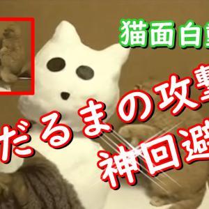 絶対笑えるネコの癒し映像!まるでコントのような行動をとる面白猫動画 厳選動画紹介